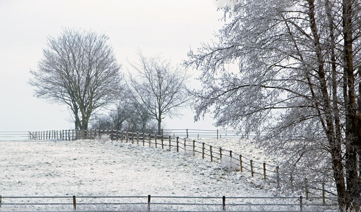 Banner Winterlandschaft