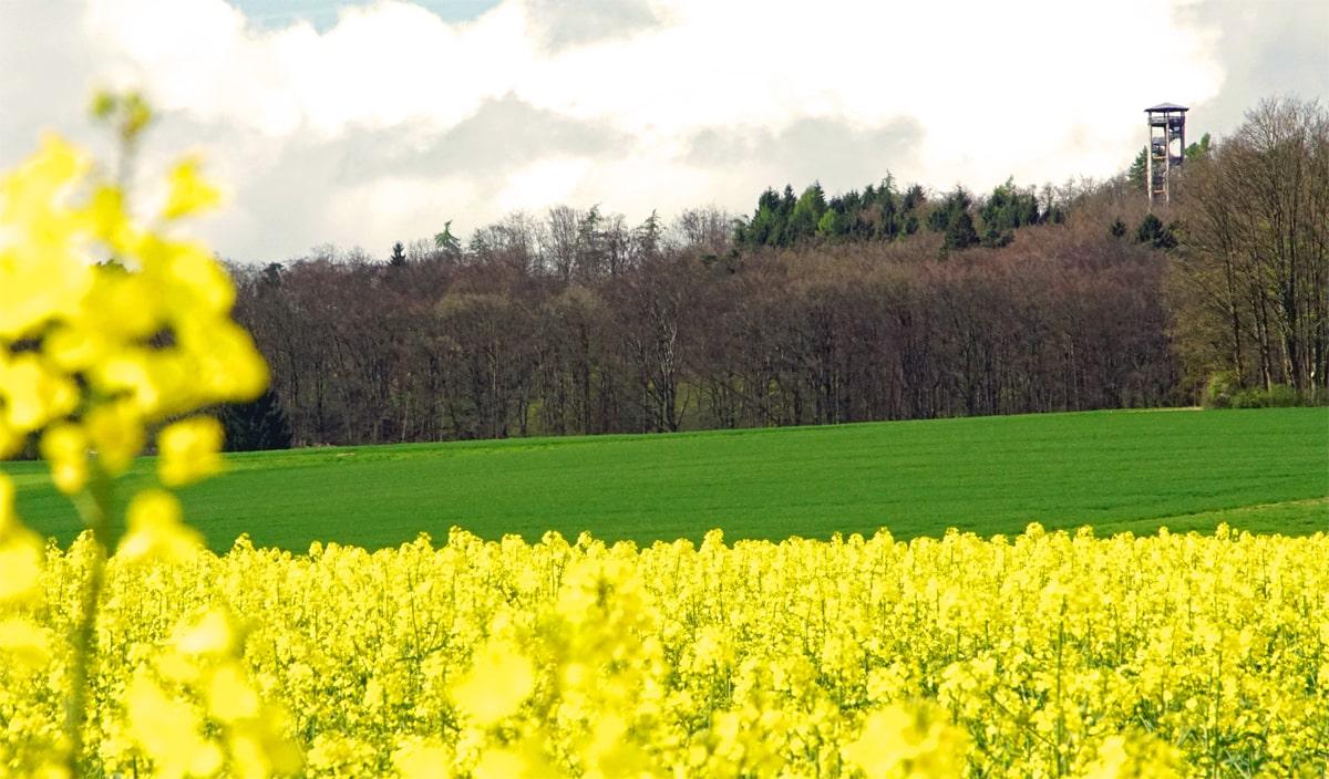 Banner Ottoshöhe 002